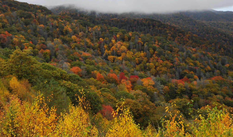 природа, mountains, great, дымчатый, парки, usa, леса, national, канада, park, деревья,