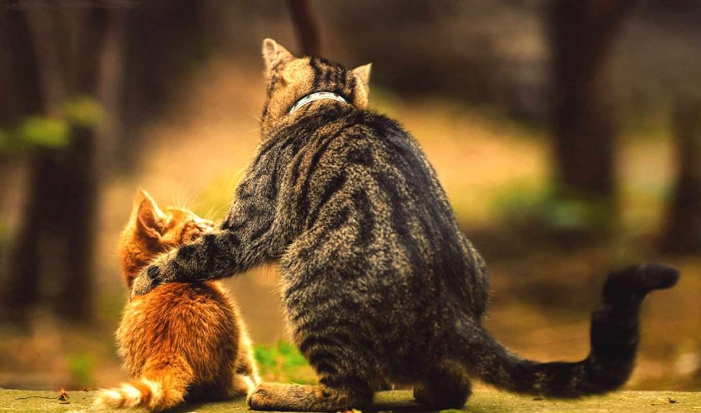 коты, почему, kot, кошки, царапают, мебель,