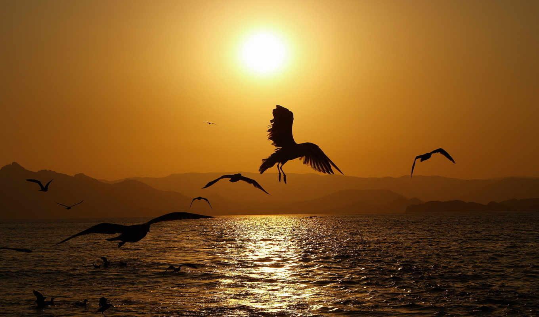 море, закат, sun, waves,