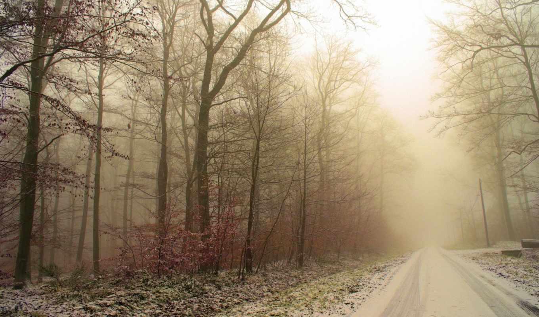 дорога, следы, лес, зима, иней, деревья, снег, эти,