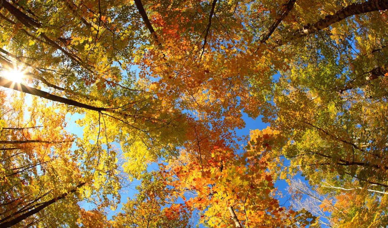 осень, погода, trees, umbrella, теплая, images, resolution, home, selected, free, resoloution, tab, this, size, download, без, осадков, октября, ожидается, украине, дни, деревья,