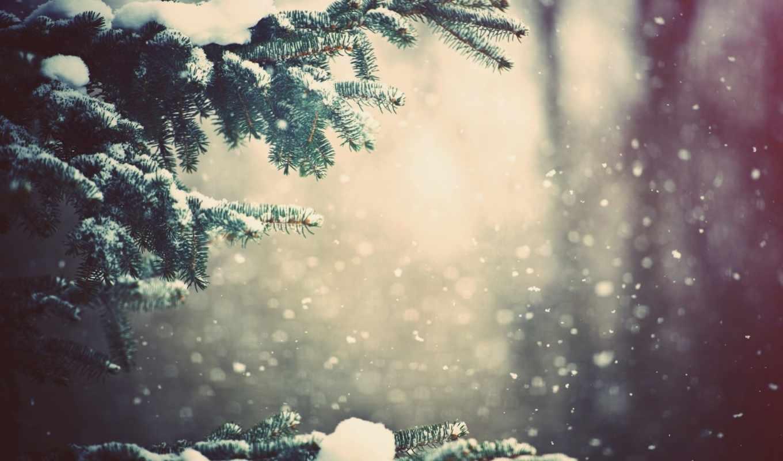 winter, снег, дерево, год, new,