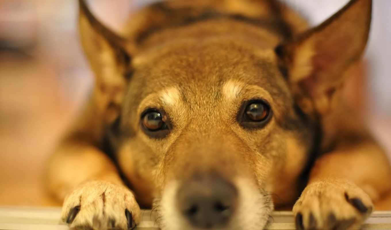 разрешения, собаками, большого, популярные,