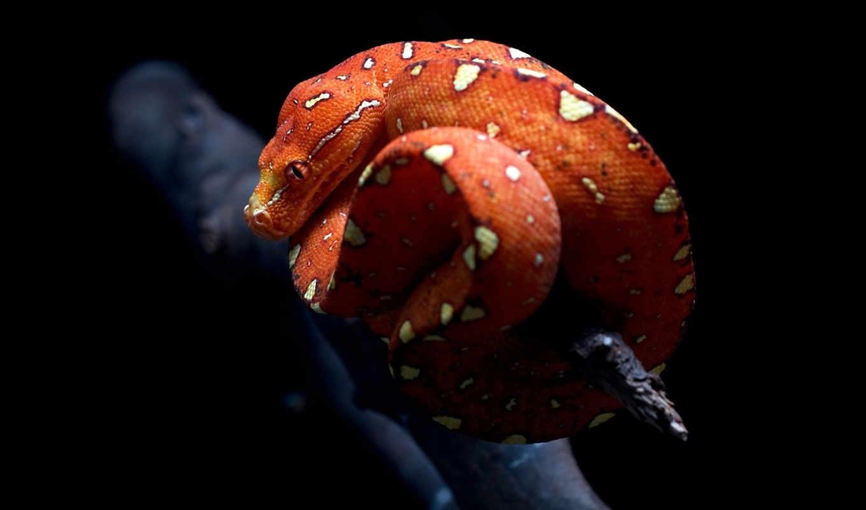 змеи, коллекция, snake,