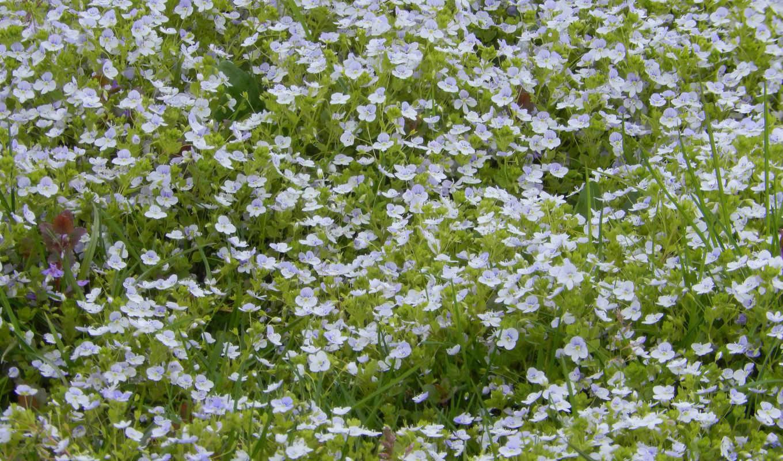 widescreen, flowers, трава, fullscreen,