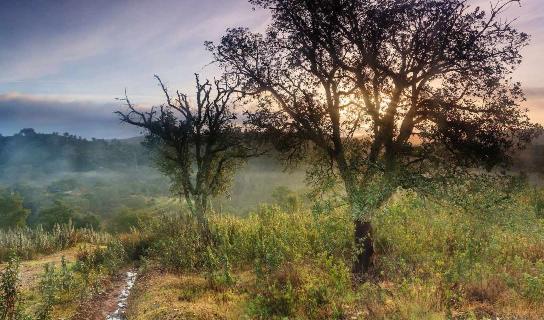 небо, утро, природа, туман, пейзажи -, trees, windows, трава,