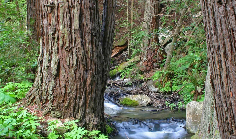 ручей, лесу, пейзаж, nature, небо,