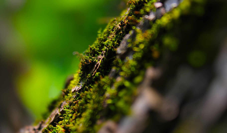 мох, дерево, природа, зелень,