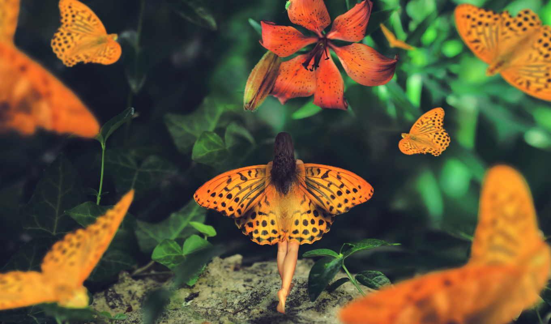 крылья, zhivotnye, бабочки, птицы, коллекция, бесплатные, fantasy,