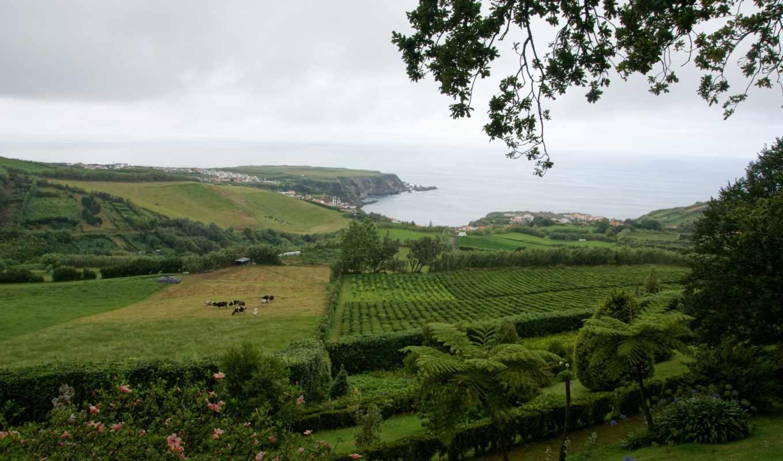 картинка, природа, португалия, красивый, побережье,