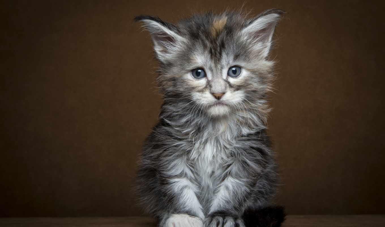 кот, кошки, грустный, того, мире, место, найдет, спать, следы, себе,