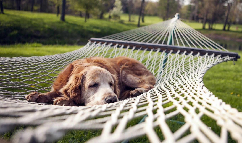 animals, depth, поле, природа, собака, perro, трава, trees,