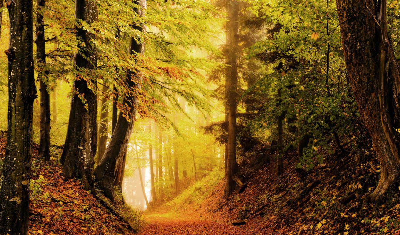 природа, осень, лес, листва, яркость, дорога, картинку,