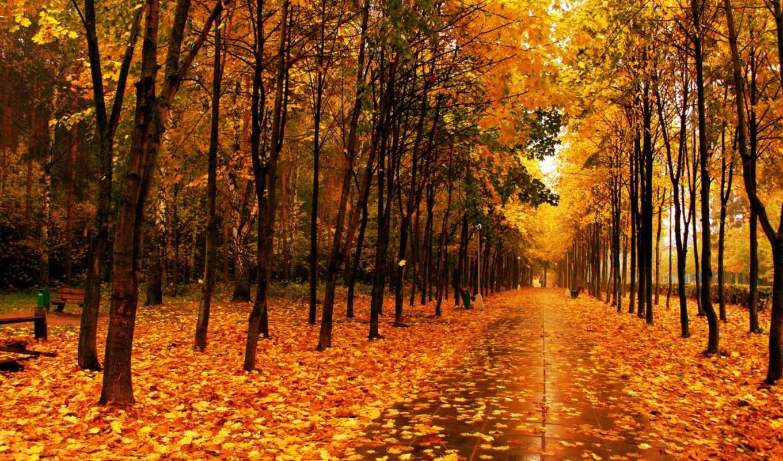 осень, парк, деревья, листья, аллея, картинка,