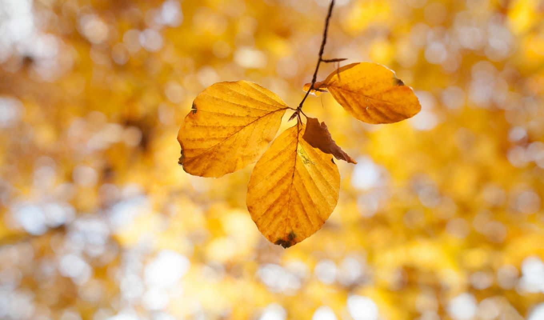 yenta, фото, осень,