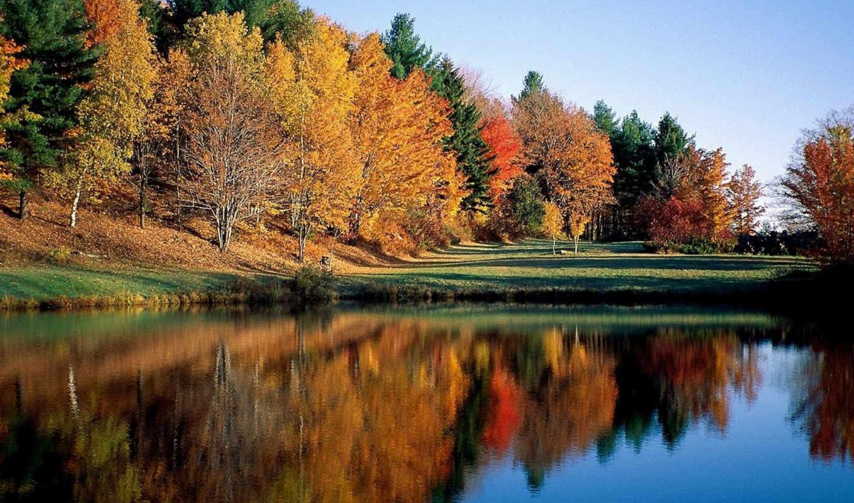 осень, первым, бутон, осенью, осени, днем, пролетая, где, со, наших,