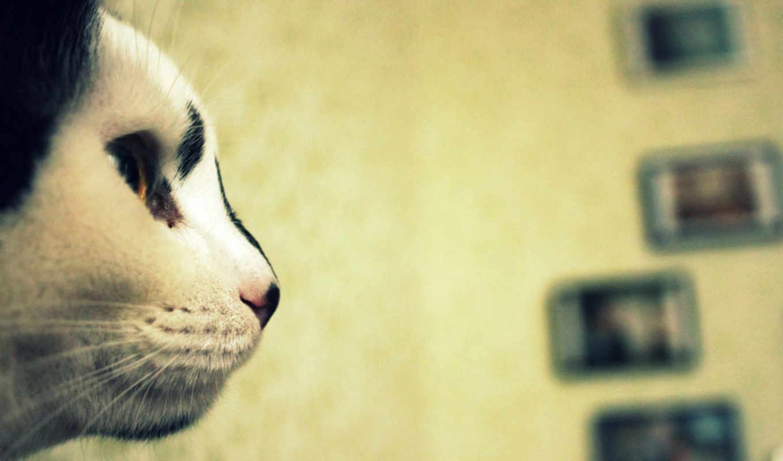 дек, profile, кот, кошками, нос, ipad, zhivotnye, котэ, морда,