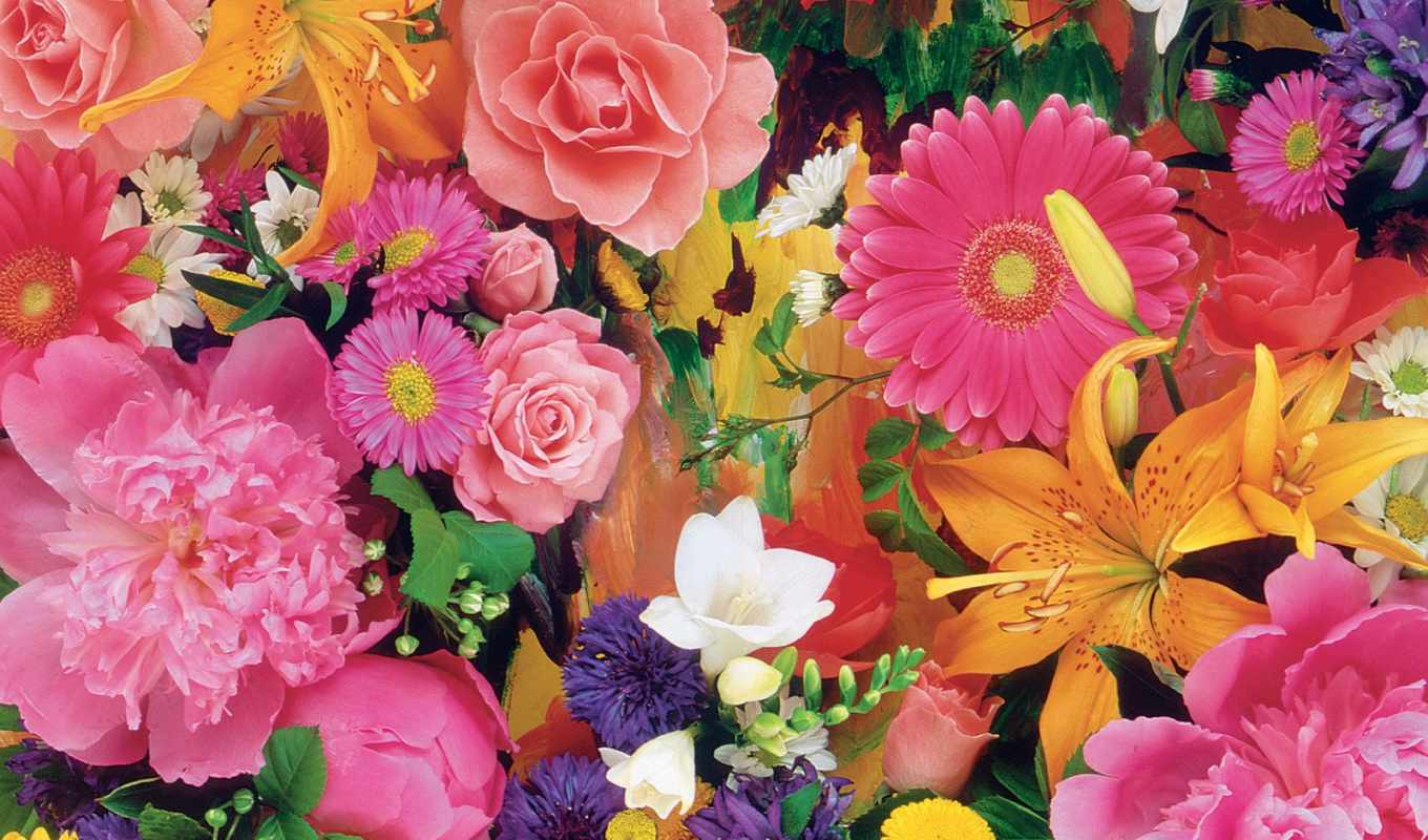 flowers, цветы, colourful, об, pinterest, see, more, images,
