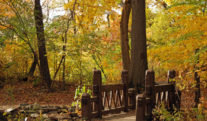самый, park, osen, priroda, мост, пейзаж, resize, wood,