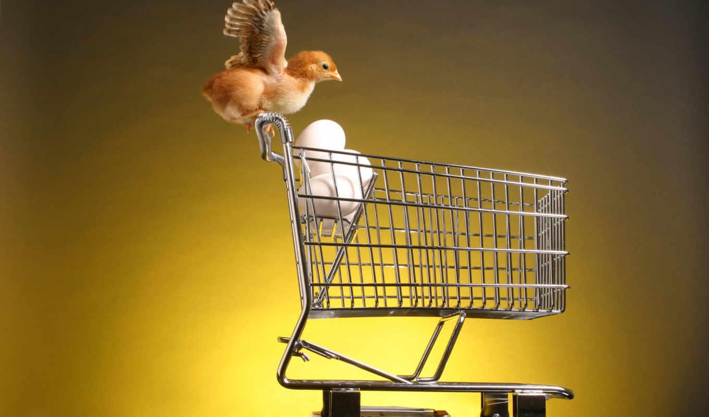 animals, цыпленок, trolley, взлете, birds, eggs, chick, код, küken, ein, zoo, fotos, eiern, wagen, einem, mit,