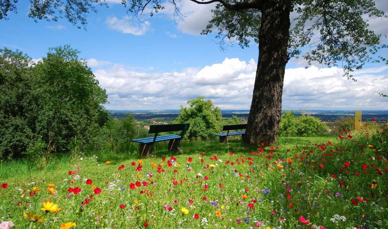 гора,весная,дерево,скамейка,цветы,