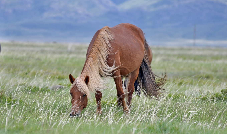 desktop, компьютер, взгляд, лошадь,