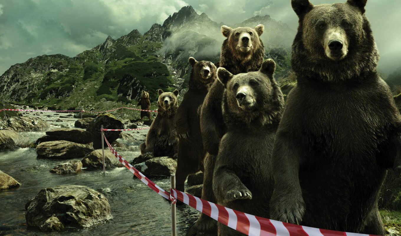 прикольные, юмор, медведи, приколы, nevseoboi, компьютера, горы,