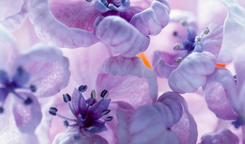 цветы, personal, дневник, июн,
