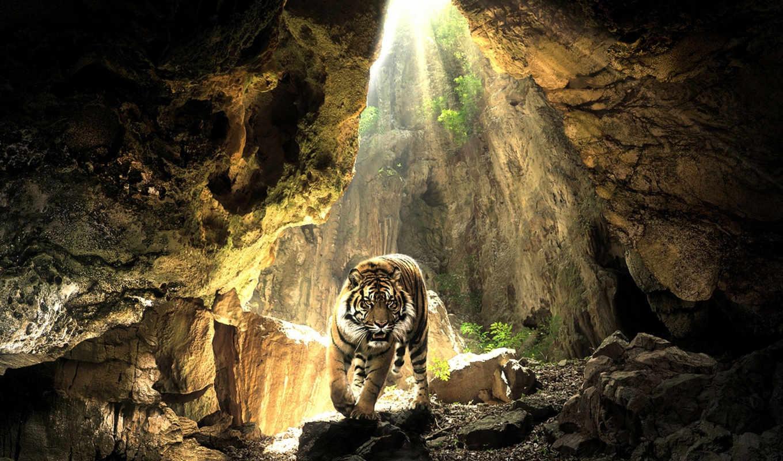 тигр, пещере, тигра, zhivotnye, заставки,