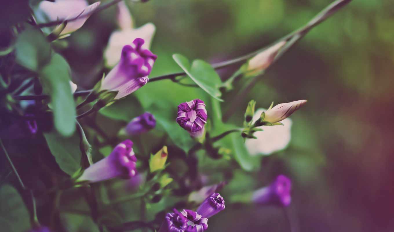 цветы, осень, зеленые, оттенки,