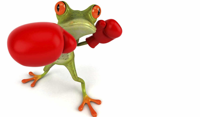 box, лягушка, free, графика, boxer, перчатки, квакша,