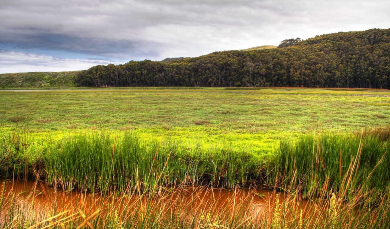 forest, green, nature, download, desktop, wetland, widescreen, high, field,