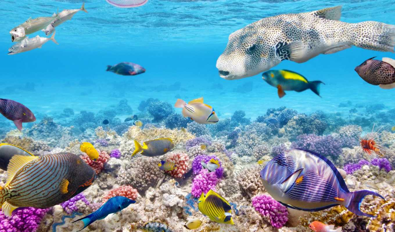 world, underwater, купить, pisces, кораллы, фотообои,