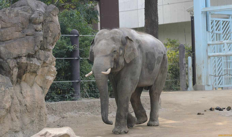слоны, zhivotnye, картинку, zoom, loupe, нити, косметика, натуральная, хирургические,