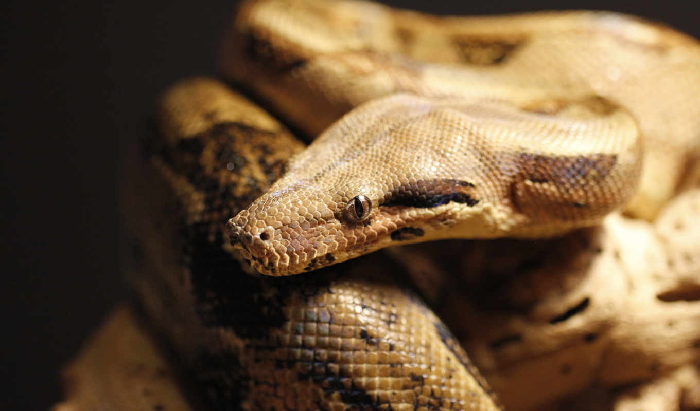 animals, snakes, awesome, photos, desktop, full, изображение,