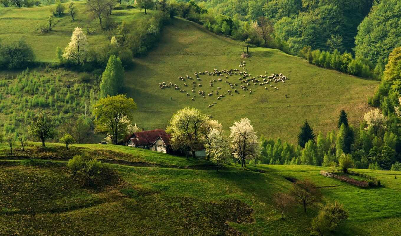 oir, landscape, лес, фото