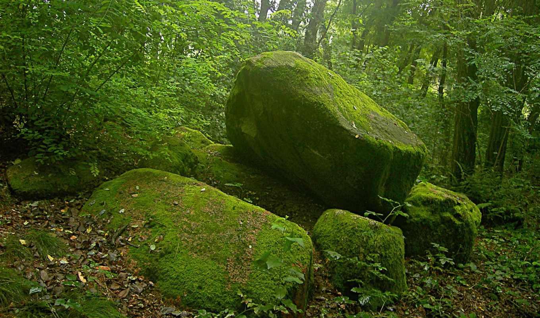 мох, лес, камнях, скалы,