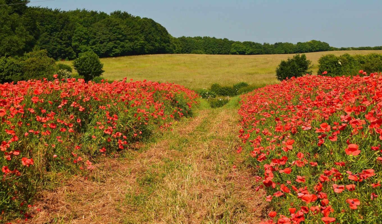 поле, природа, you, poppy, desktop, resolution, are, маки, don,
