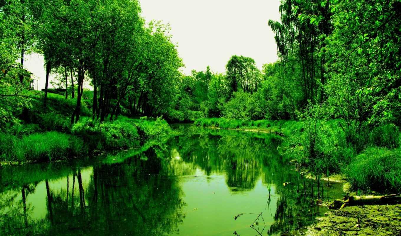 лес, деревя, reservoir, река, совершенно, свой,