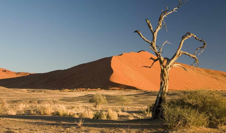 desert, namibia, namib, sossusvlei, tree, earth, пустыни, oldest, image, click, fondo, iphone, africa, thorn,