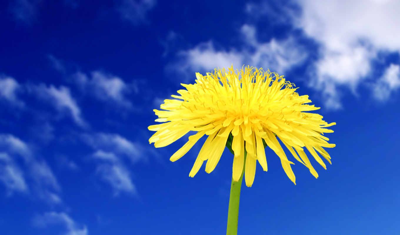 цветы, красивых, подборка, цветов, browse, одуванчик, красивые,