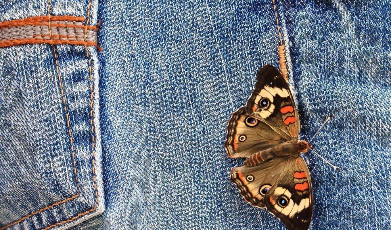 джинсы, бабочка, бабочки, бесплатные, макро,