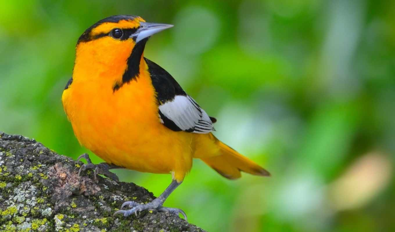 yellow, птица, красивые, микс, дневник, птиц, you, дерево, волк,