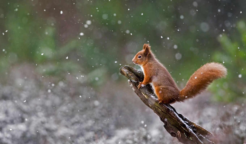 снег, bing, winter, zhivotnye, широкоформатные, you, bit, ly, initial,