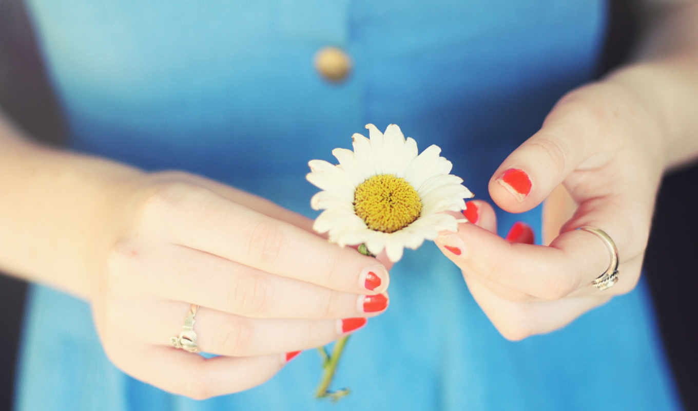 ромашка, девушка, руки, фокус, кольцо, ногти