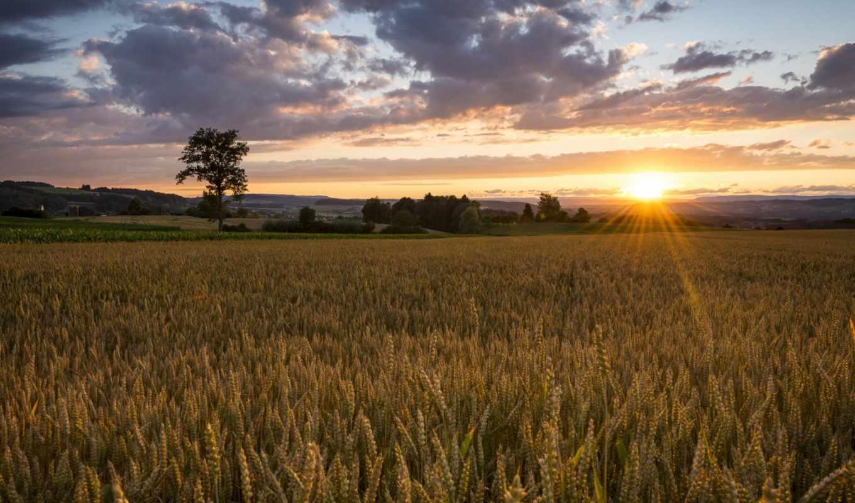 восход, поле, природа, картинка, картинку, пейзаж, кнопкой, мыши,