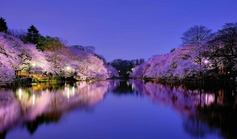 япония, Сакура, мост, цветы, река,