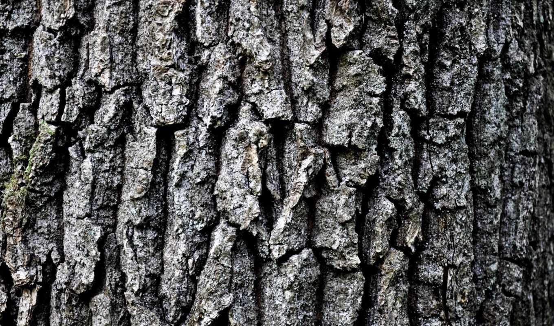 кора, дерево, high, grey, текстура,