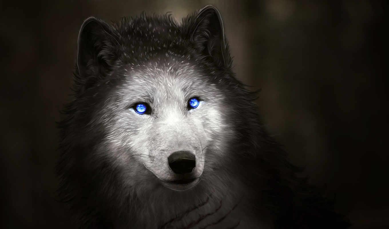 волк, black, artwork, blue, eyes, minimal, коллекциях, card, sombra, overwatch,