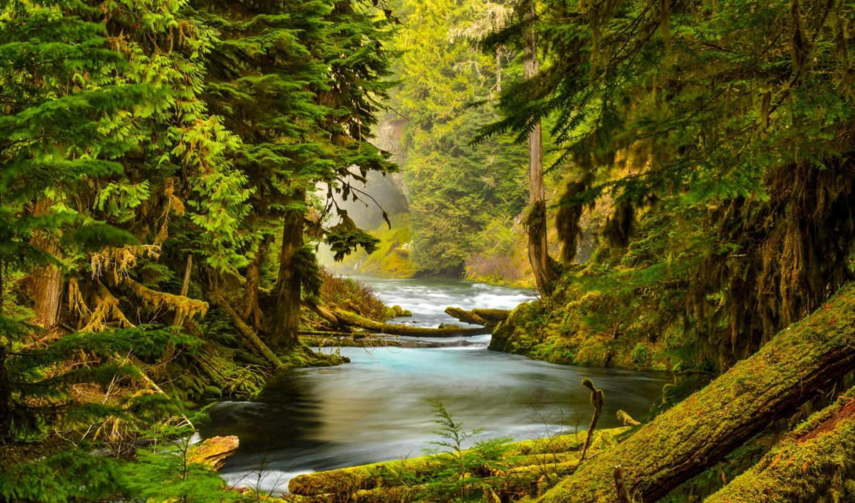 лес, деревья, река, mckenzie, уровень, скалы, природа, oregon, мох, пиратские, сокровища,
